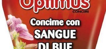 SANGUE-DI-BUE