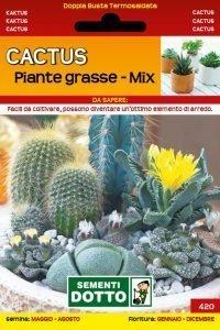 Cactus e Piante Grasse Mix