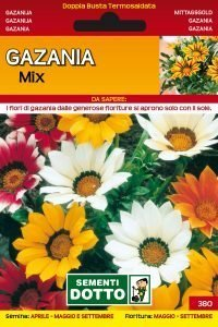 Gazania
