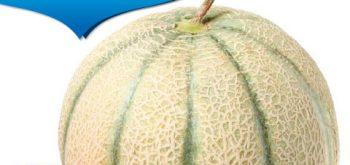 Melone Esador F1