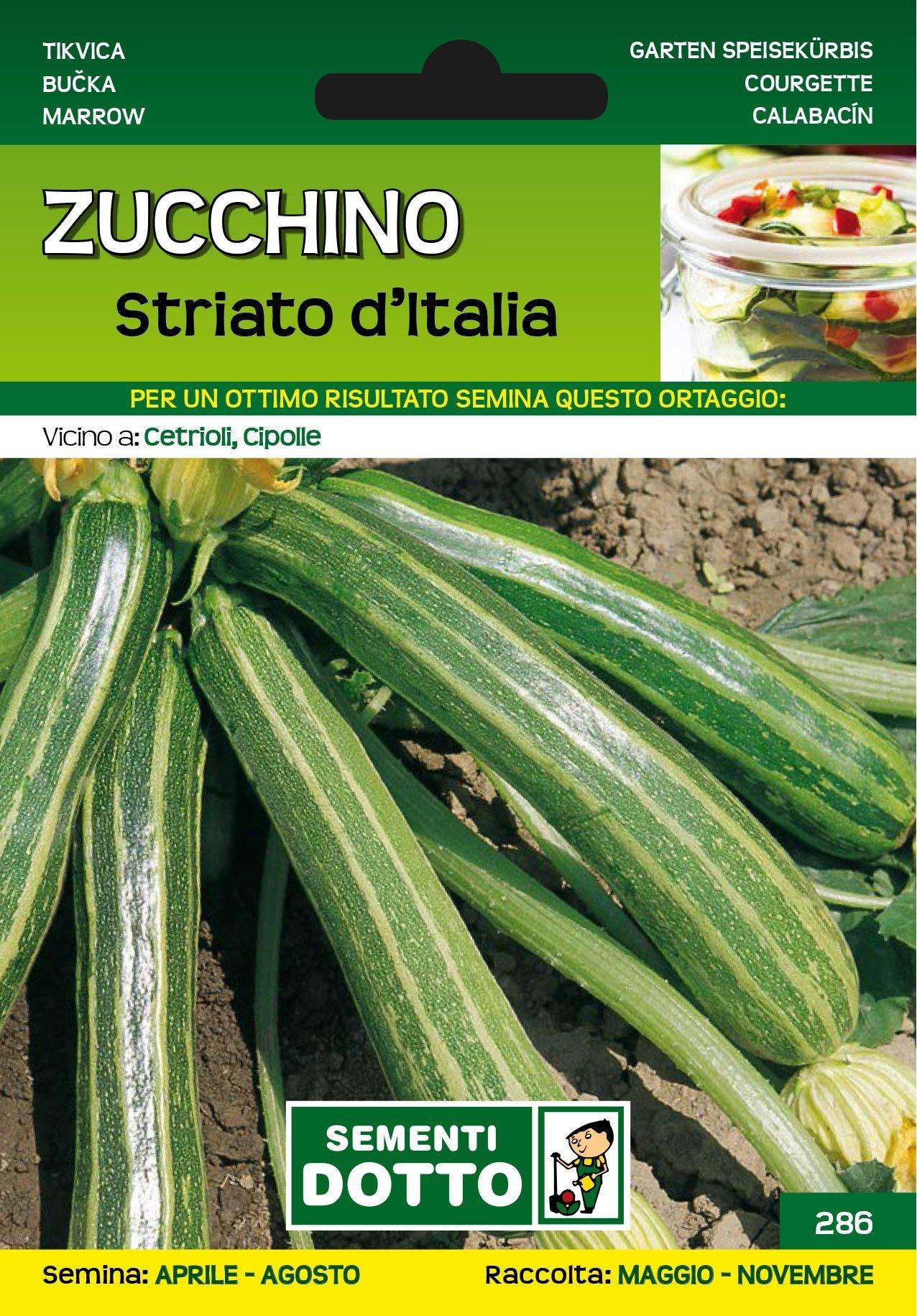Varietà Zucchine Da Fiore zucchino striato d'italia - semi per orto - sementi dotto