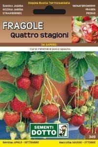 FRAGOLE 4 STAGIONI