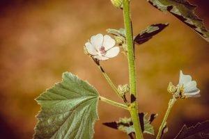 coltivare le aromatiche in giardino