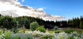 piante per il giardino in montagna