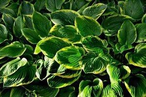 piante adatte per un giardino in ombra