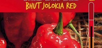 Peperoncino Bhut Jolokia Red