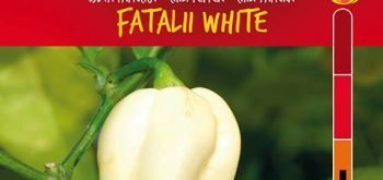 Peperoncino Fatalii White