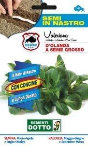 Valeriana D'Olanda a Seme Grosso - Semi in nastro