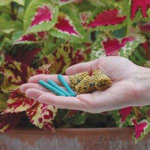 concimare le piante in vaso