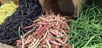 Sementi per legumi