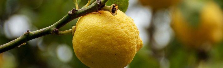 coltivare il Limone