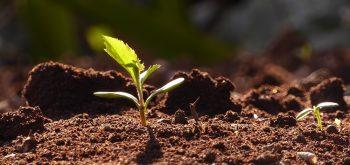usare i semi in nastro
