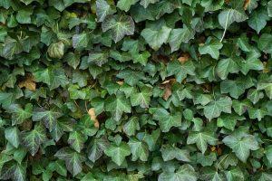 realizzare una parete verde