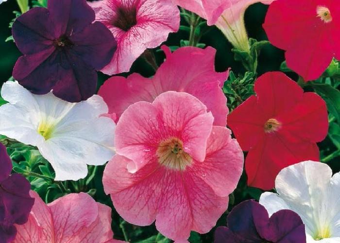 Le piante per il terrazzo in estate: quali scegliere e ...