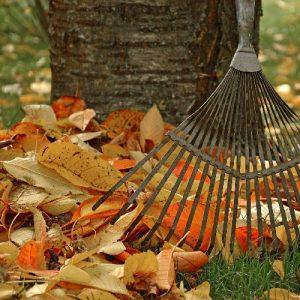 Compostaggio domestico in giardino - Foglie secche