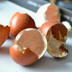 Compostaggio domestico in giardino - Gusci di uovo
