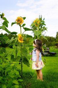 Giardinaggio con i bambini - Girasole