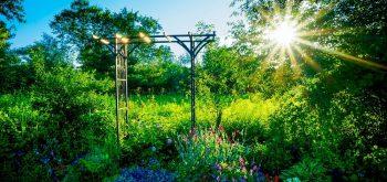 piante per le aiuole al sole
