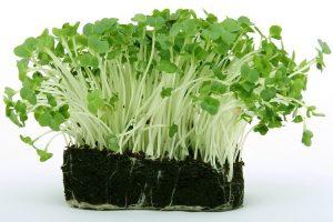 coltivare il Crescione