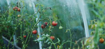 coltivare nell'orto in autunno