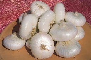 coltivare le cipolle - Cipolla Bianca di Maggio