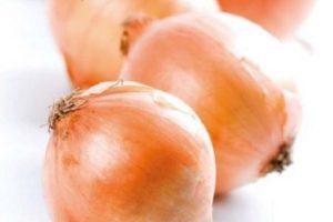 coltivare le cipolle - Cipolla Cassiopea