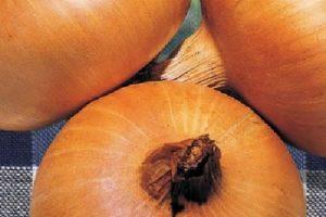 coltivare le cipolle - Cipolla Stuttgarter