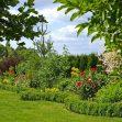 piante sempreverdi in giardino