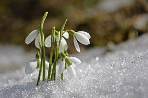 terrazzo invernale fiorito - Bucaneve