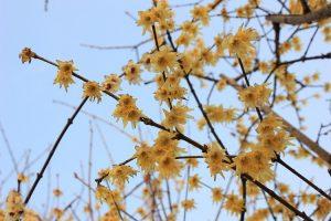 terrazzo invernale fiorito - Calicanto