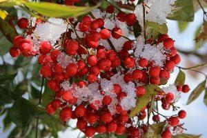 terrazzo invernale fiorito - Nandina