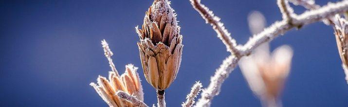 proteggere le piante dal gelo