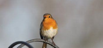 Uccelli in libertà