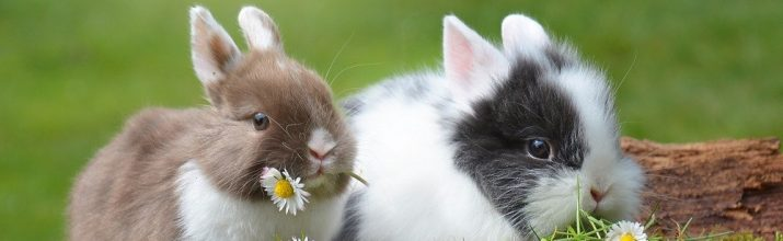 alimentazione dei conigli nani