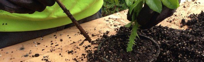 moltiplicare le piante per talea