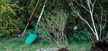 piantare un arbusto
