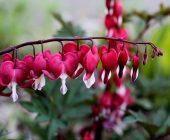 scegliere i bulbi da fiore primaverili