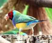 alimentare gli uccelli esotici