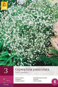 gypsophila_paniculata