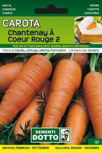 Carota-Chantenay-a-Coeur-Rouge-1
