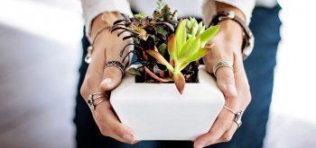 Coltivare le piante grasse