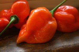 coltivare i Peperoni - Peperone Habanero
