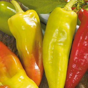 coltivare i Peperoni - Peperone Hungarian Yellow Wax-Hot
