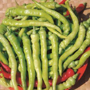 coltivare i Peperoni - Peperone Lombardo