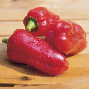 coltivare i Peperoni - Peperone Marconi Rosso