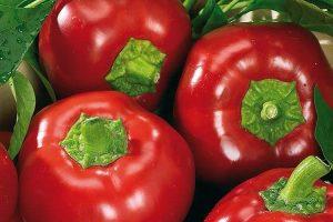 coltivare i Peperoni - Peperone Topepo Rosso
