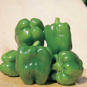 coltivare i Peperoni - Peperone Yolo Wonder