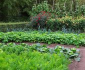 piante che crescono velocemente