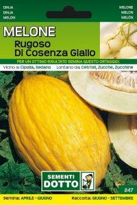 Melone-Rugoso-di-Cosenza-Giallo