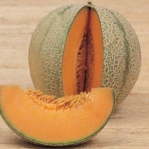 coltivare il Melone - Melone Retato degli Ortolani